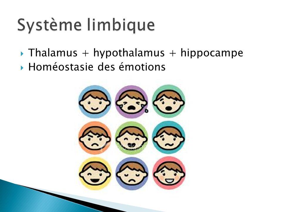 Système limbique Thalamus + hypothalamus + hippocampe