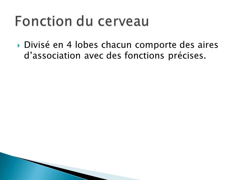 Fonction du cerveauDivisé en 4 lobes chacun comporte des aires d'association avec des fonctions précises.