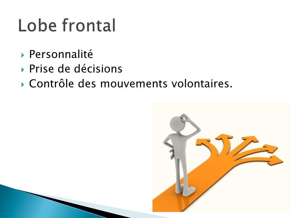 Lobe frontal Personnalité Prise de décisions