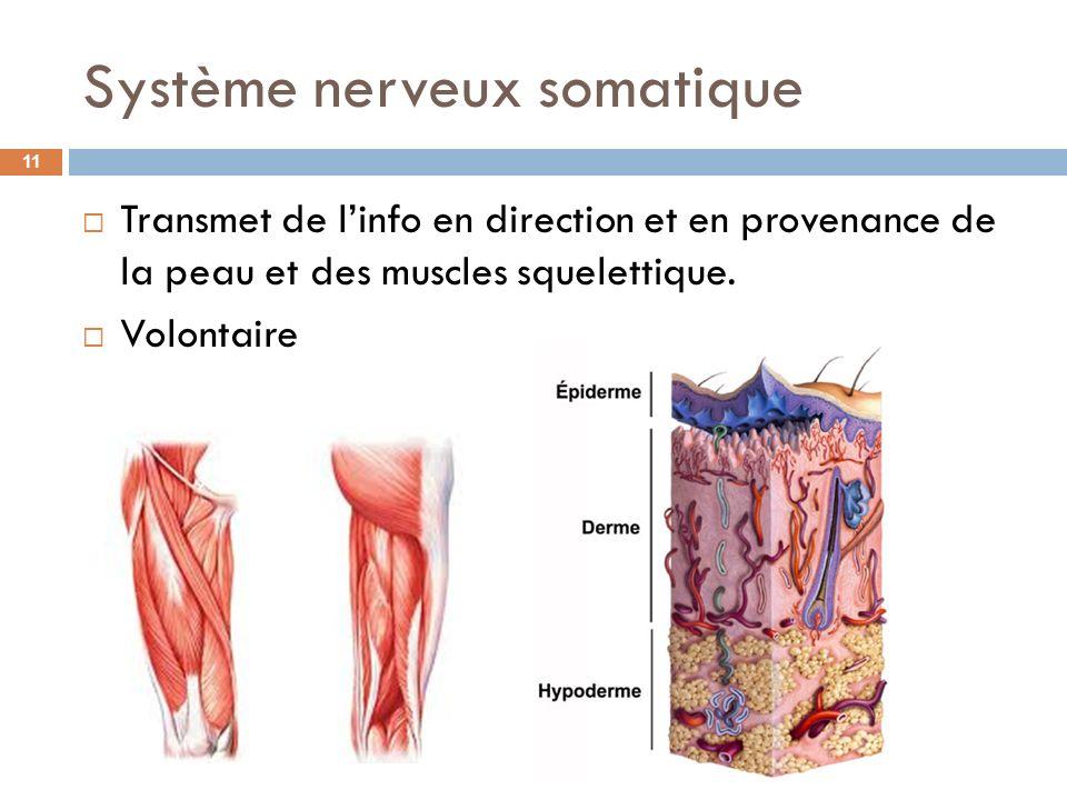 Système nerveux somatique