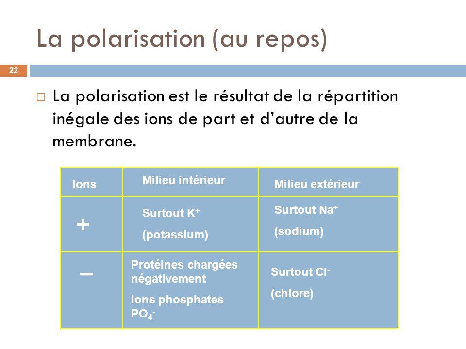 La polarisation (au repos)