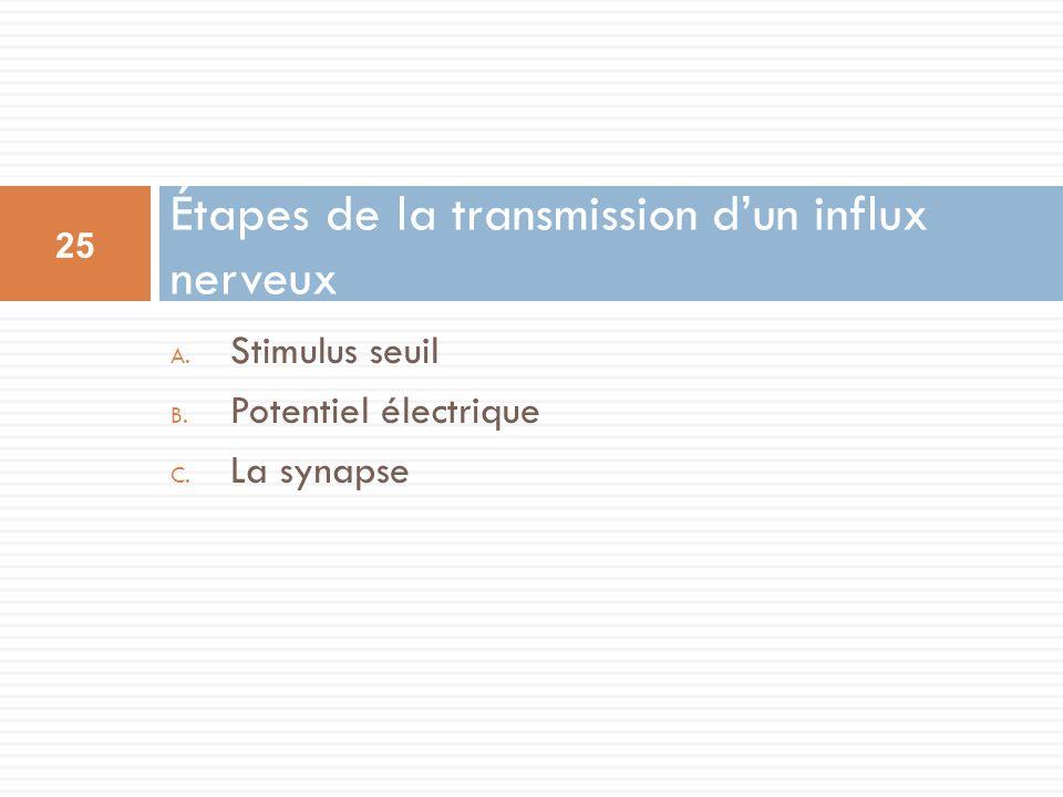 Étapes de la transmission d'un influx nerveux