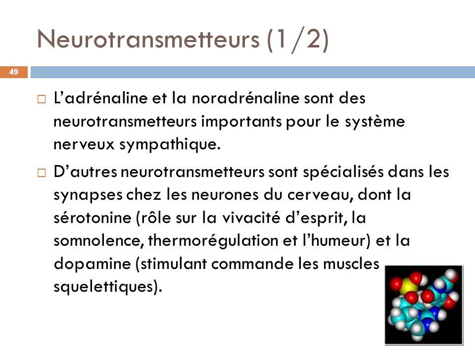 Neurotransmetteurs (1/2)