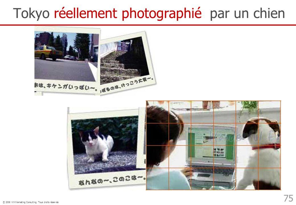 Tokyo réellement photographié par un chien