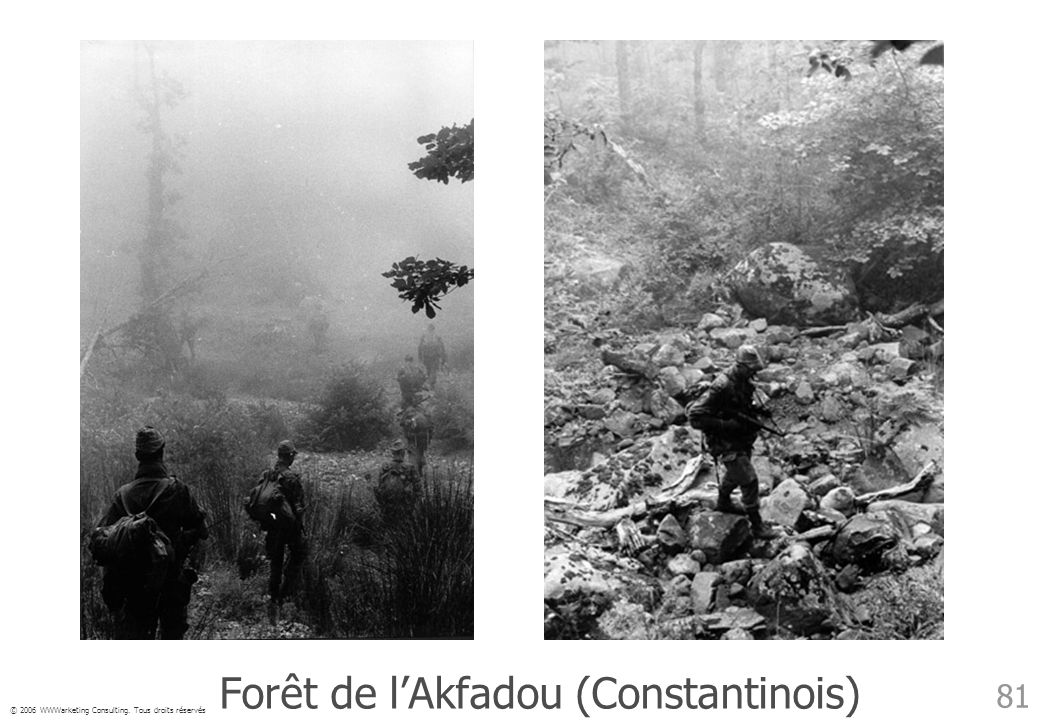 Forêt de l'Akfadou (Constantinois)