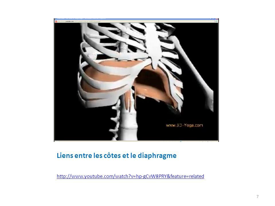 Liens entre les côtes et le diaphragme
