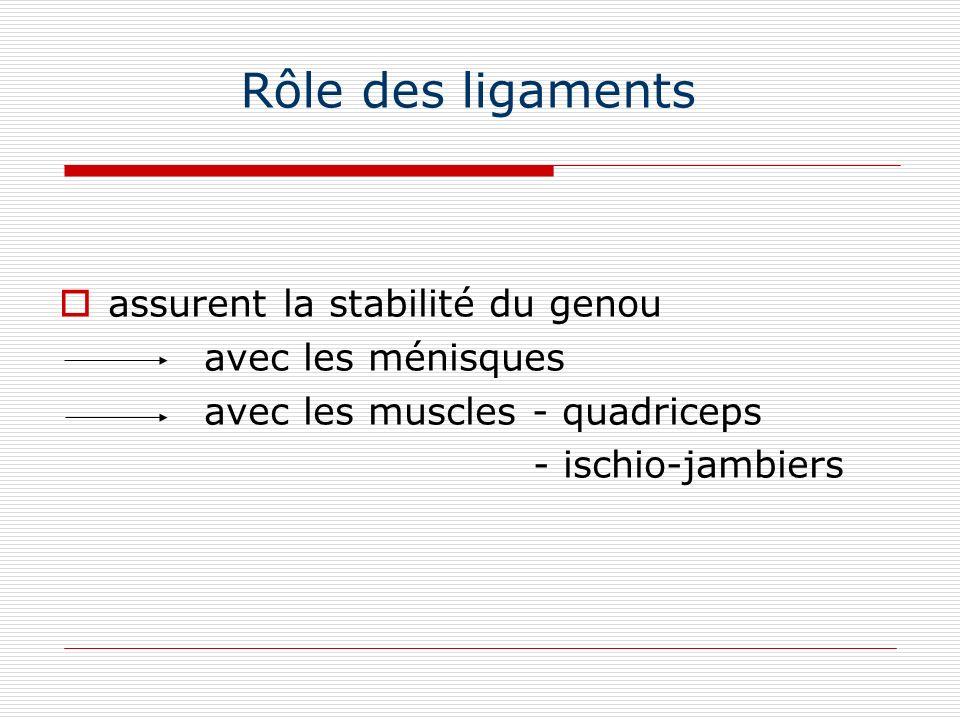 Rôle des ligaments assurent la stabilité du genou avec les ménisques
