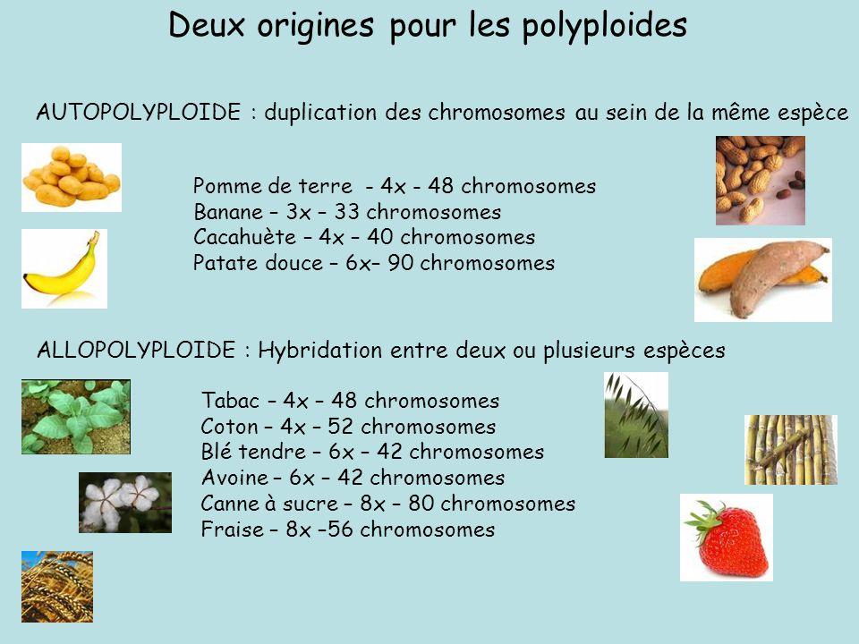 Deux origines pour les polyploides