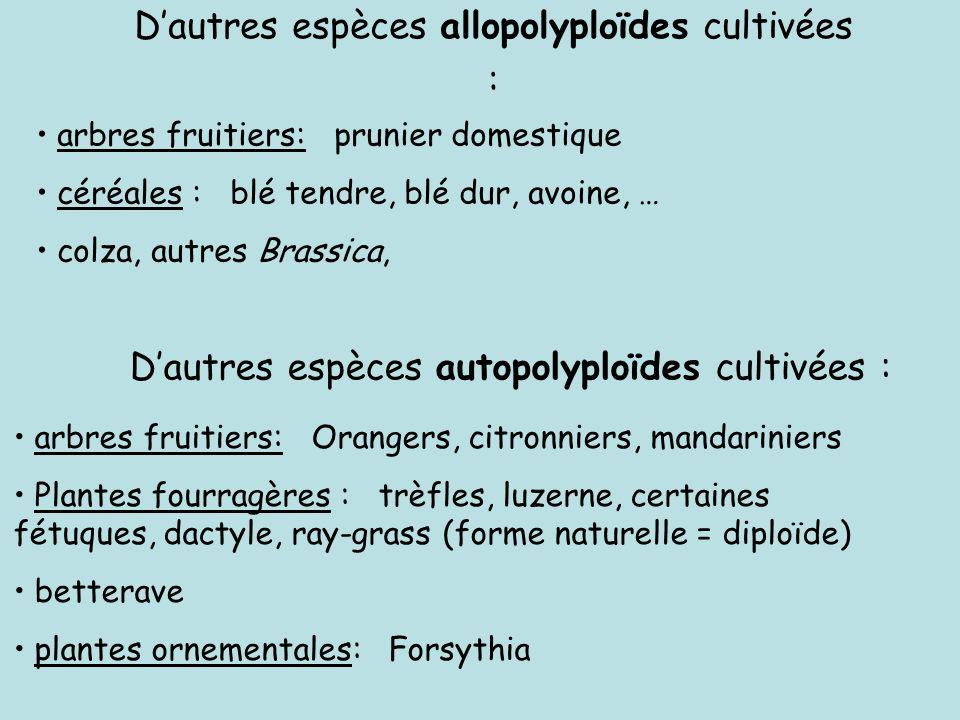 D'autres espèces allopolyploïdes cultivées :
