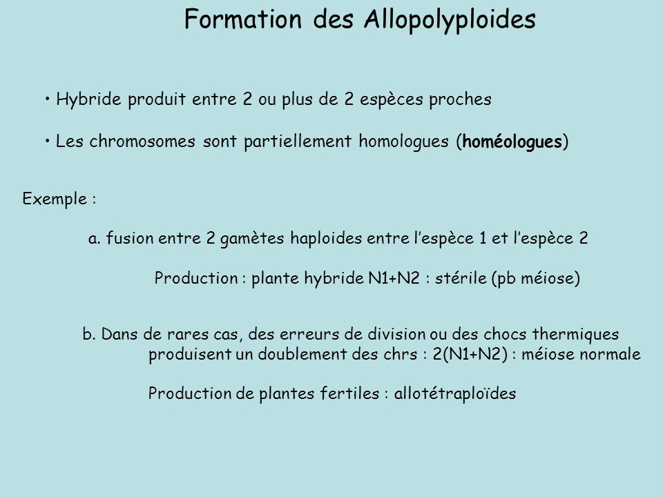 Formation des Allopolyploides