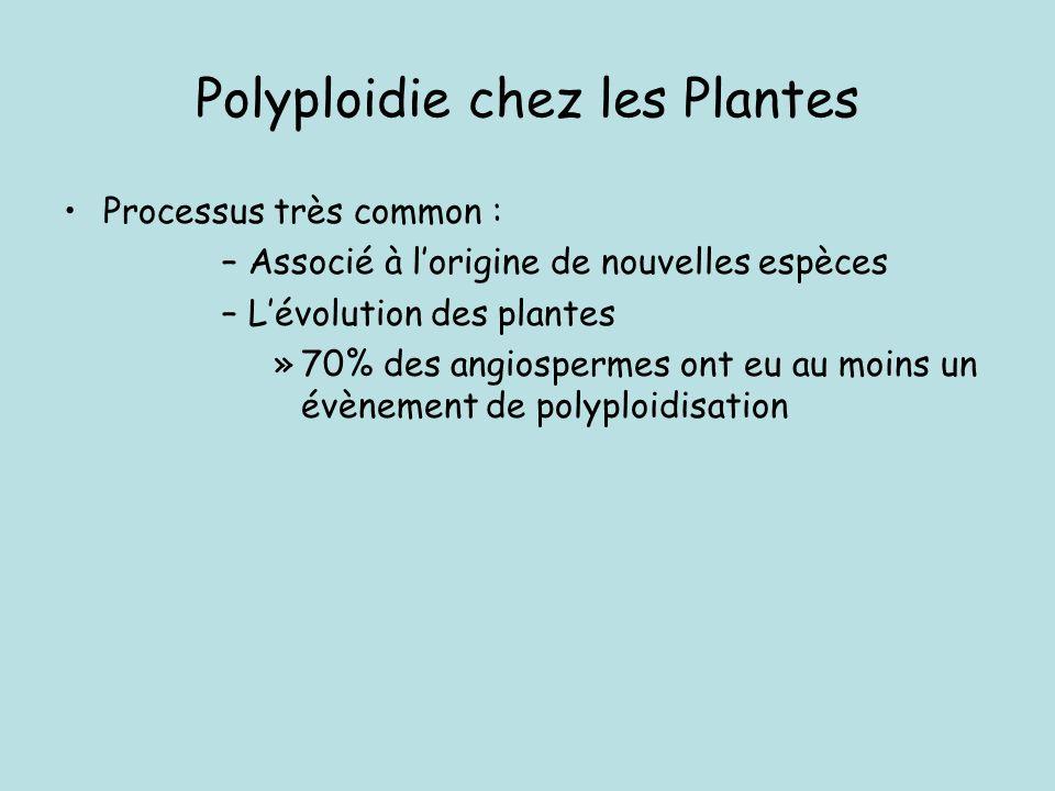 Polyploidie chez les Plantes
