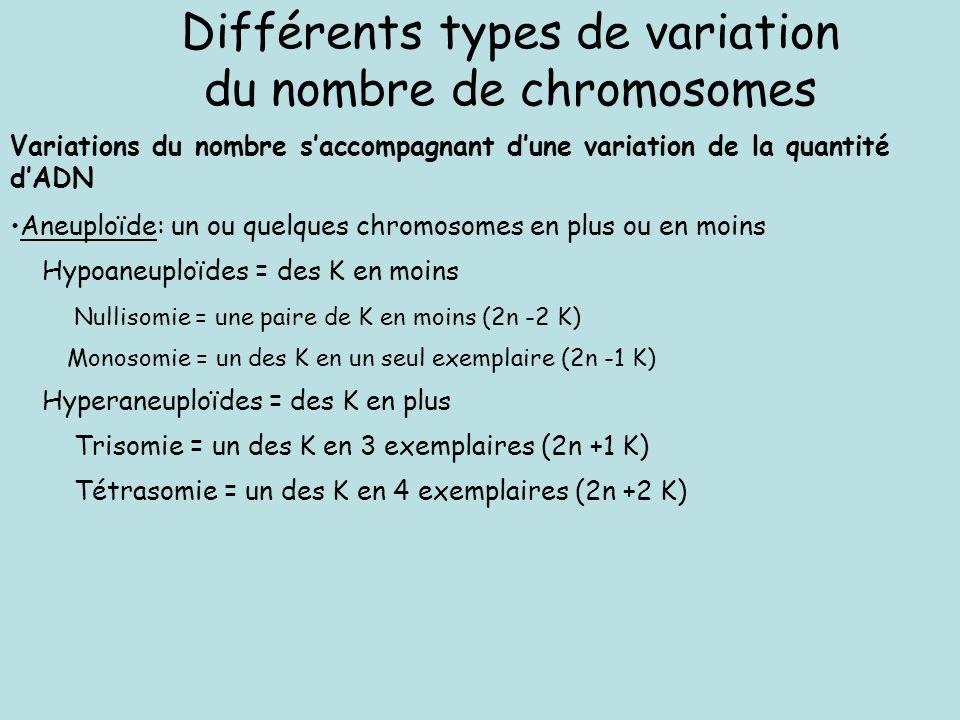 Différents types de variation du nombre de chromosomes