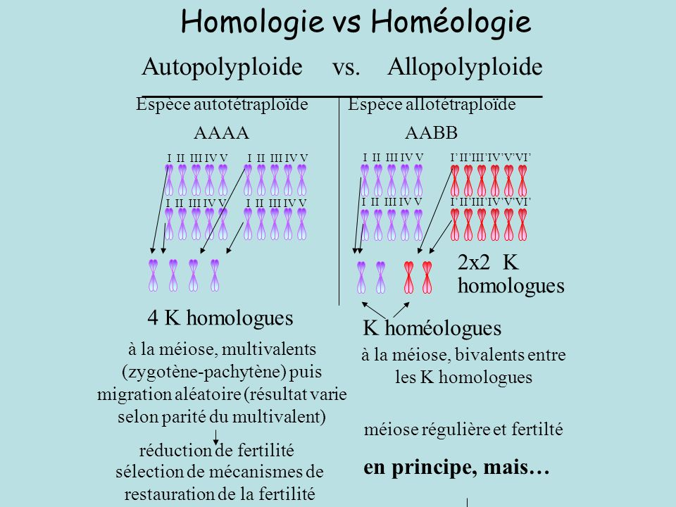 Homologie vs Homéologie