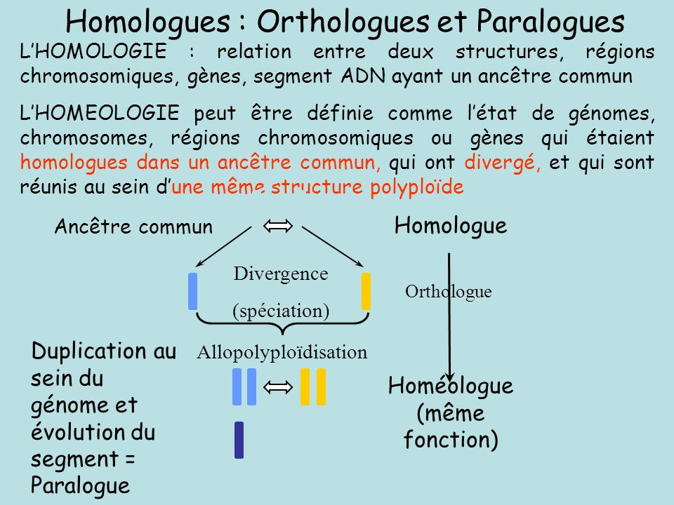 Homologues : Orthologues et Paralogues