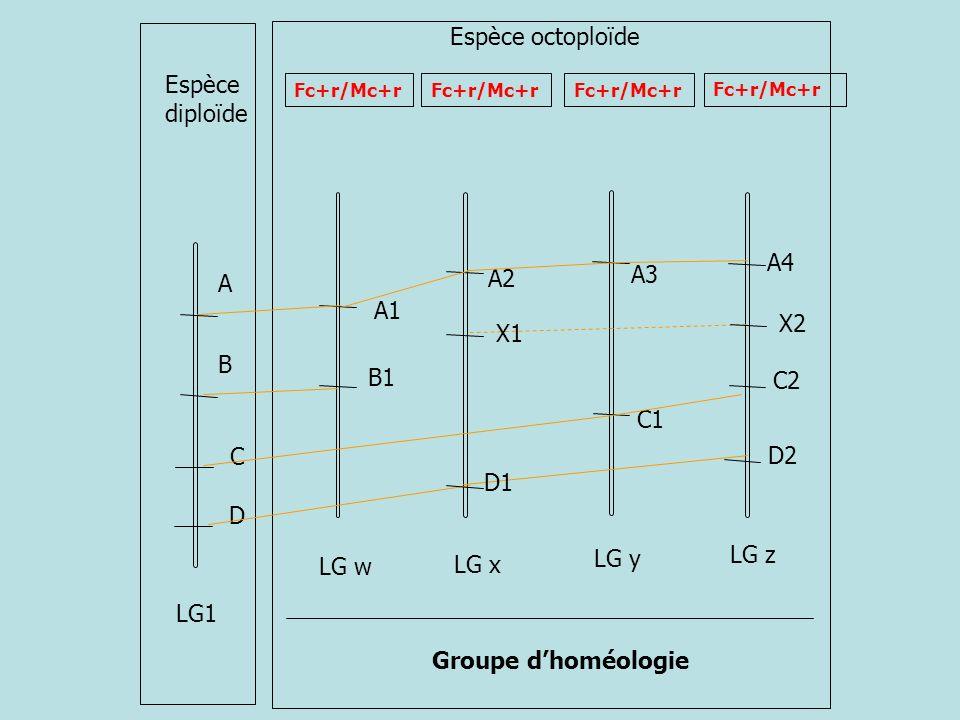 Espèce octoploïde Espèce diploïde A4 A3 A2 A A1 X2 X1 B B1 C2 C1 C D2