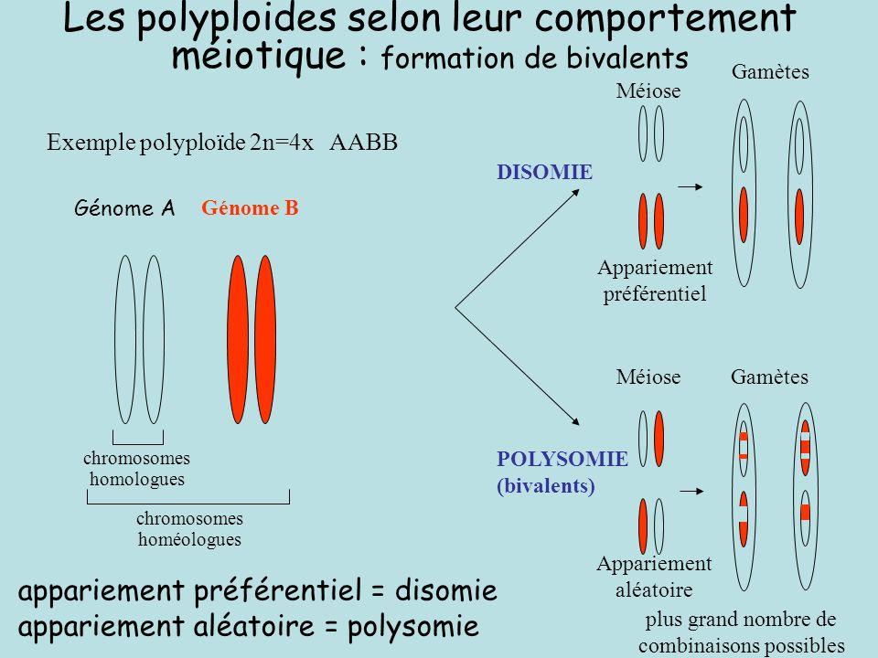 Les polyploides selon leur comportement méiotique : formation de bivalents