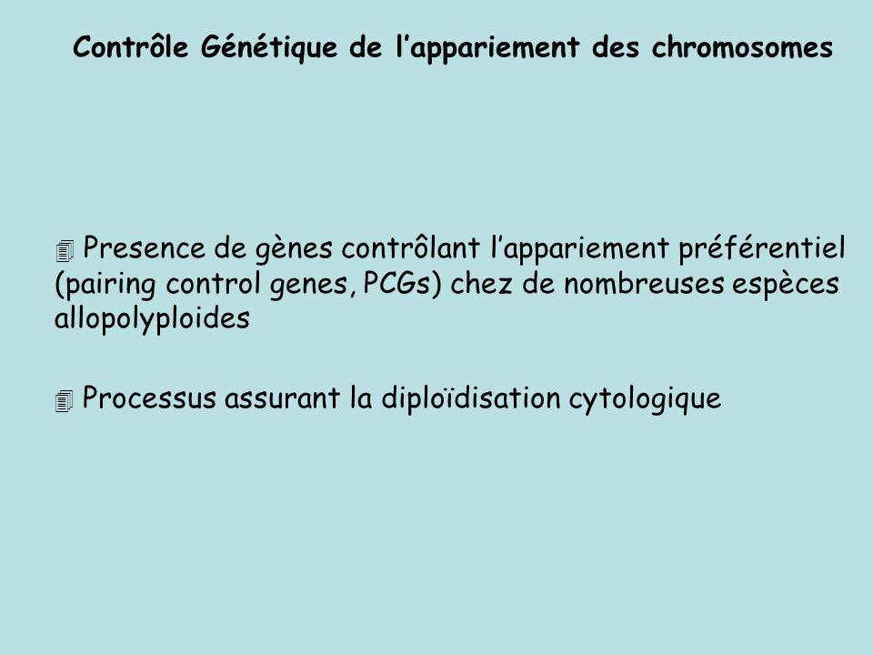 Contrôle Génétique de l'appariement des chromosomes