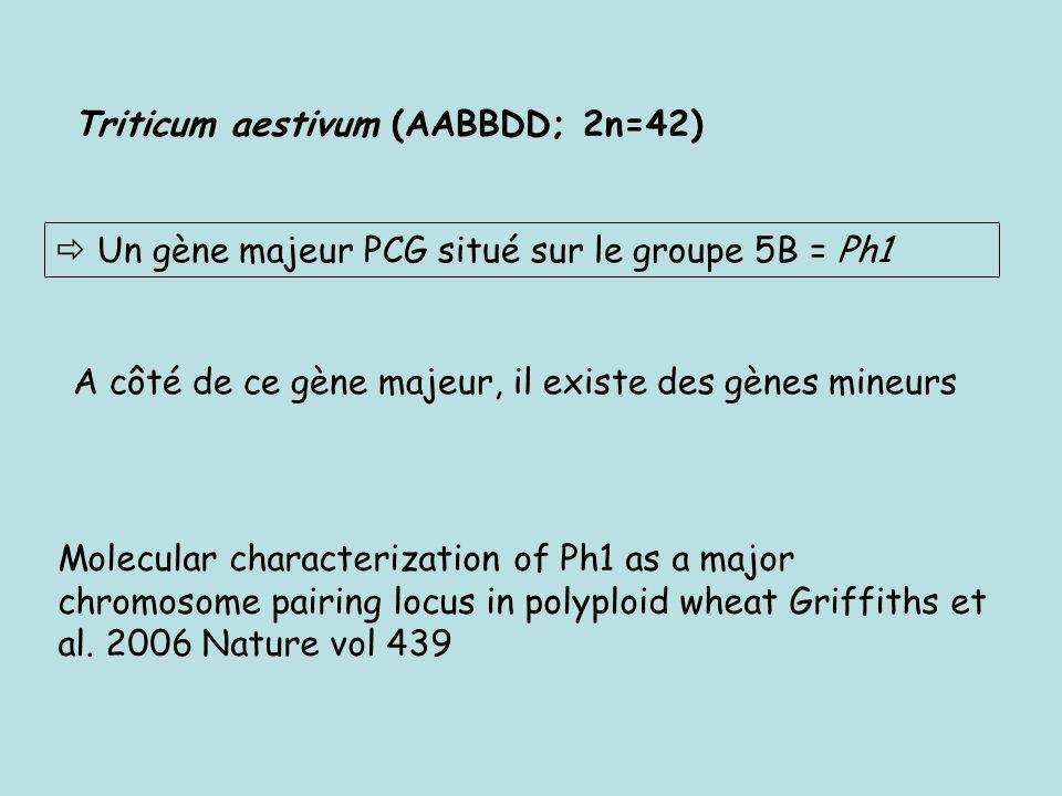 Triticum aestivum (AABBDD; 2n=42)