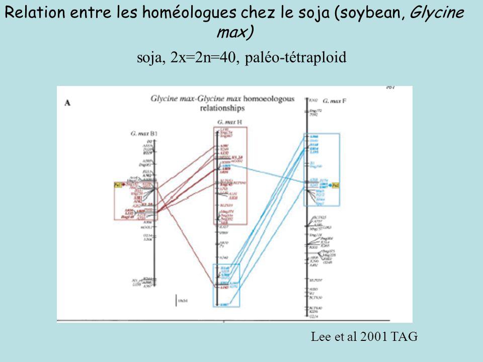 Relation entre les homéologues chez le soja (soybean, Glycine max)