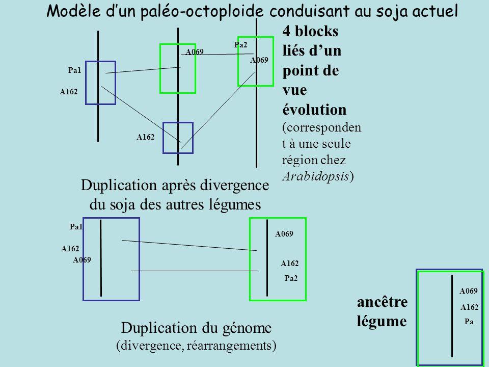 Modèle d'un paléo-octoploide conduisant au soja actuel
