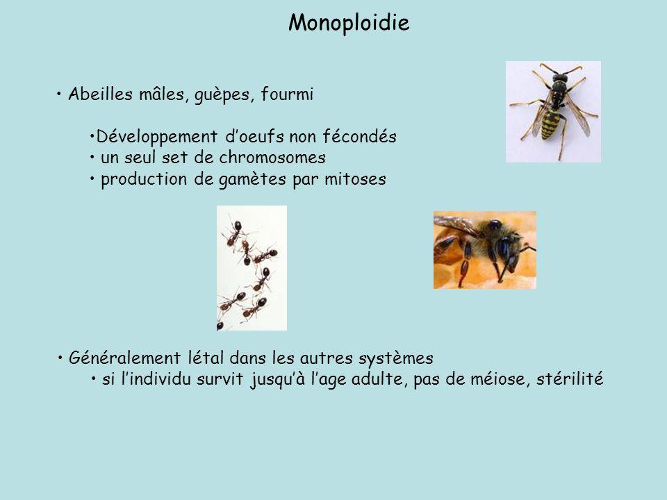 Monoploidie Abeilles mâles, guèpes, fourmi