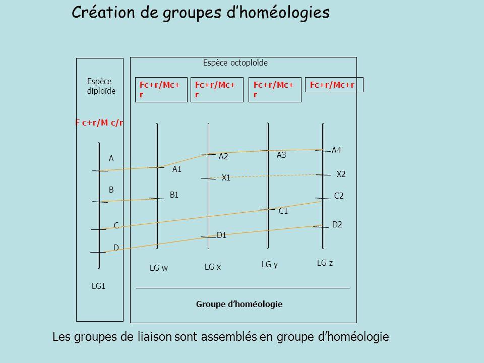 Création de groupes d'homéologies