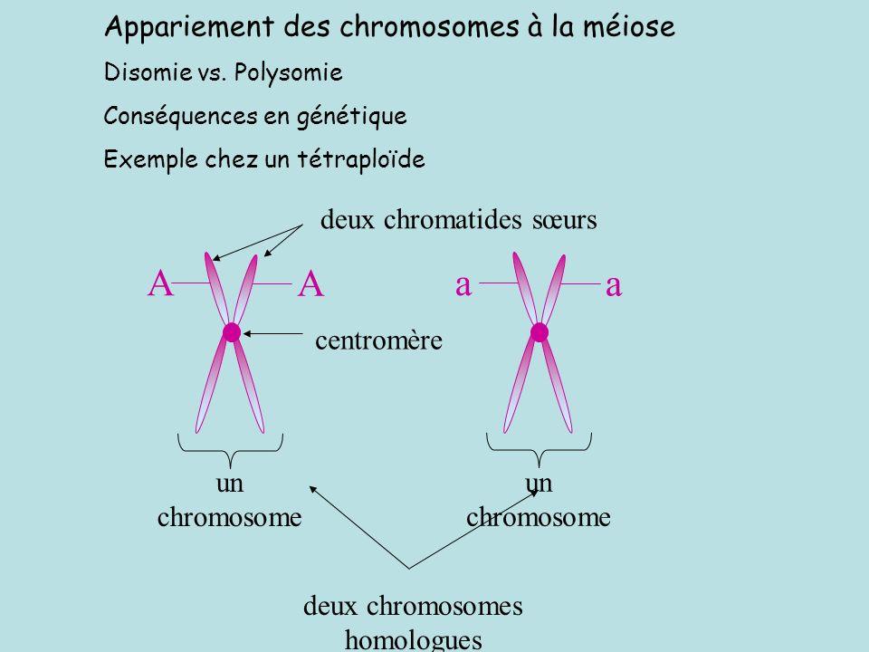 deux chromosomes homologues