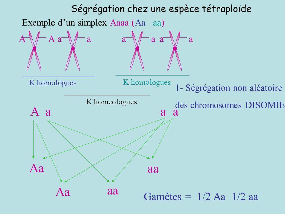 Ségrégation chez une espèce tétraploïde