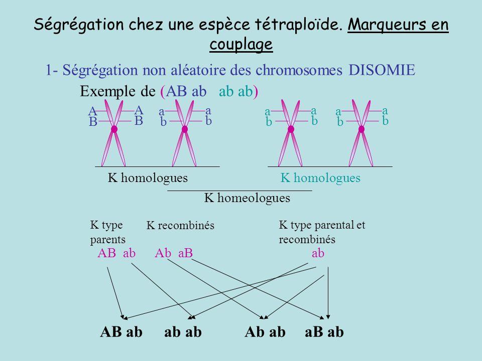 Ségrégation chez une espèce tétraploïde. Marqueurs en couplage
