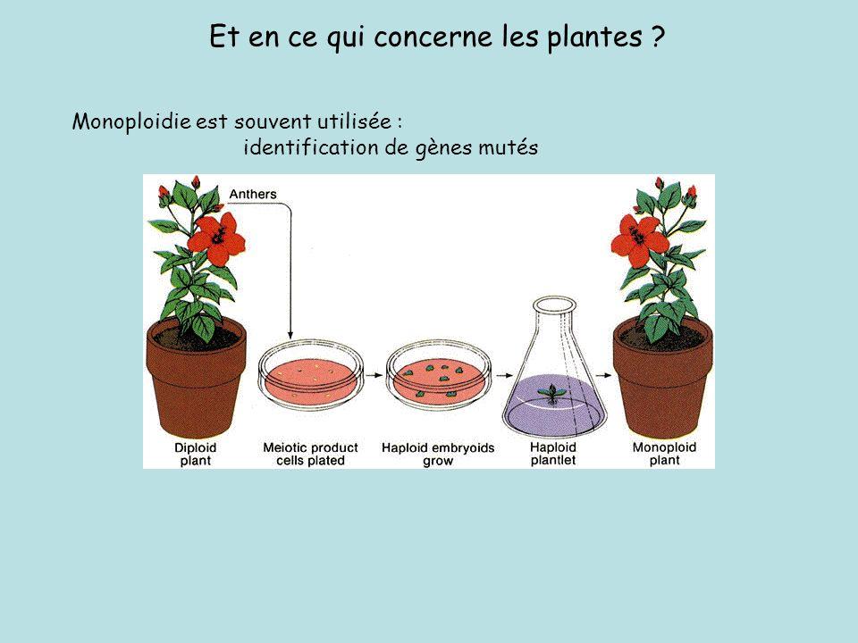 Et en ce qui concerne les plantes