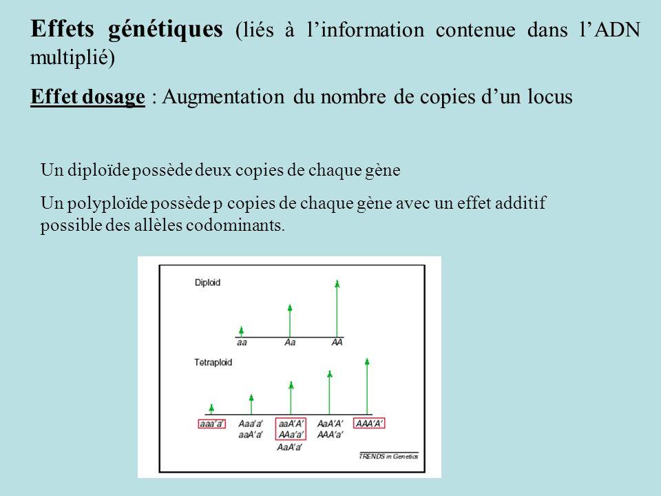 Effets génétiques (liés à l'information contenue dans l'ADN multiplié)
