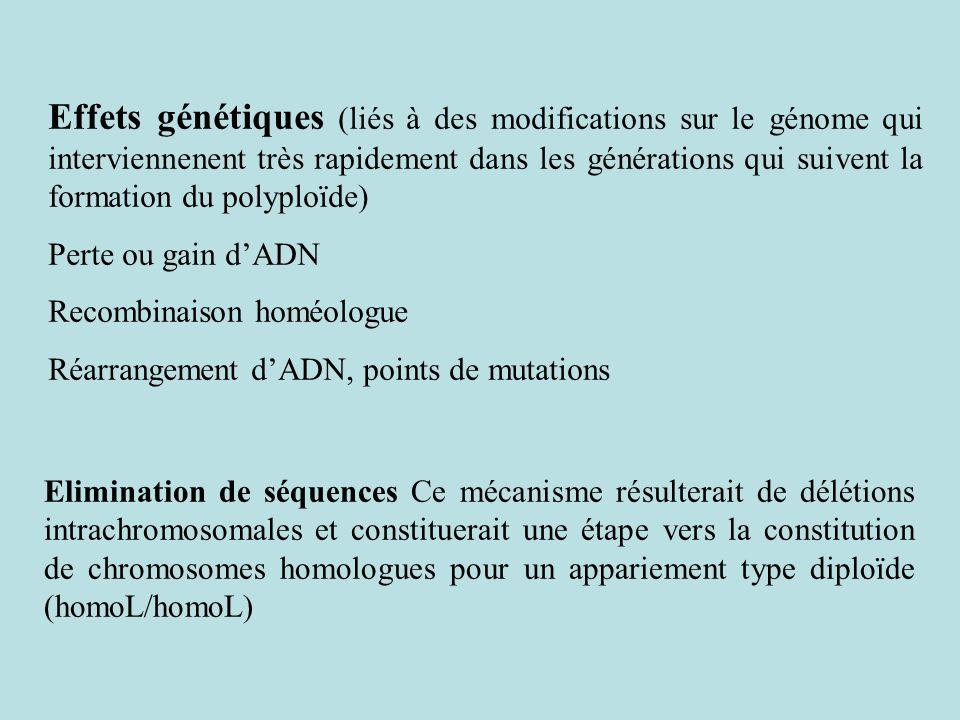 Effets génétiques (liés à des modifications sur le génome qui interviennenent très rapidement dans les générations qui suivent la formation du polyploïde)