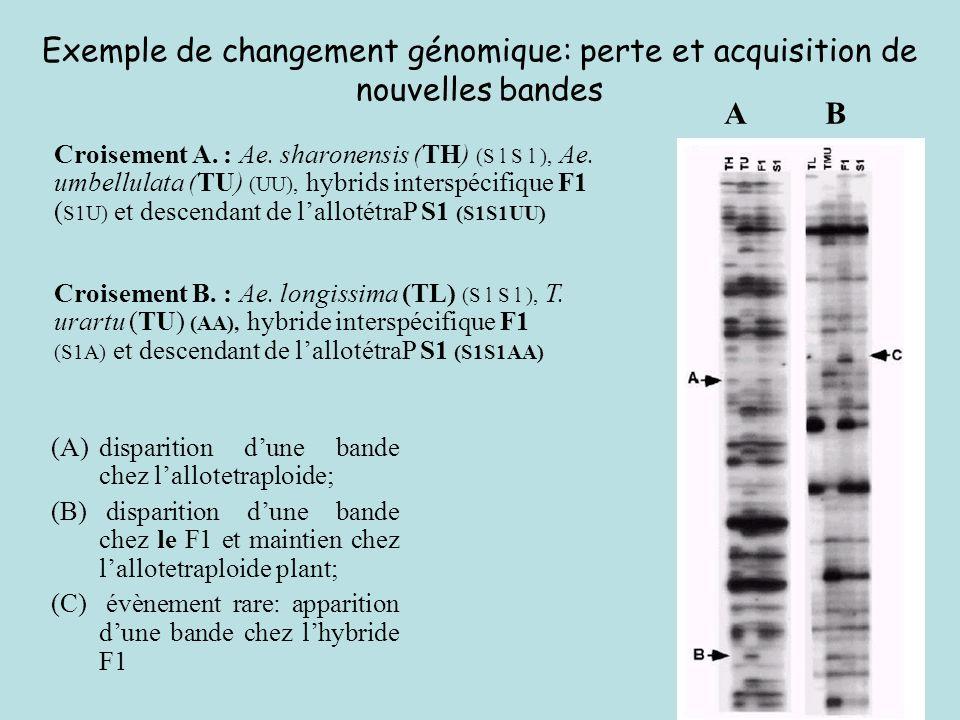 Exemple de changement génomique: perte et acquisition de nouvelles bandes