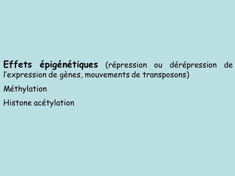 Effets épigénétiques (répression ou dérépression de l'expression de gènes, mouvements de transposons)