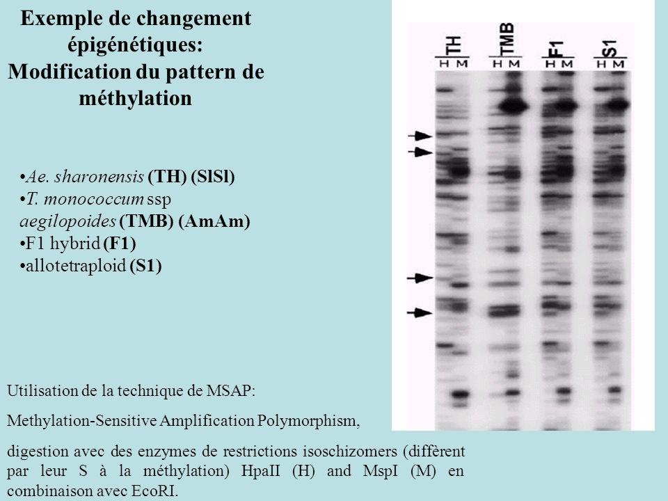Exemple de changement épigénétiques: Modification du pattern de méthylation