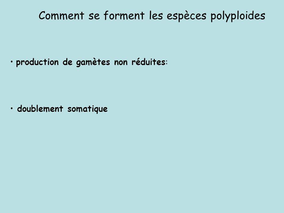 Comment se forment les espèces polyploides