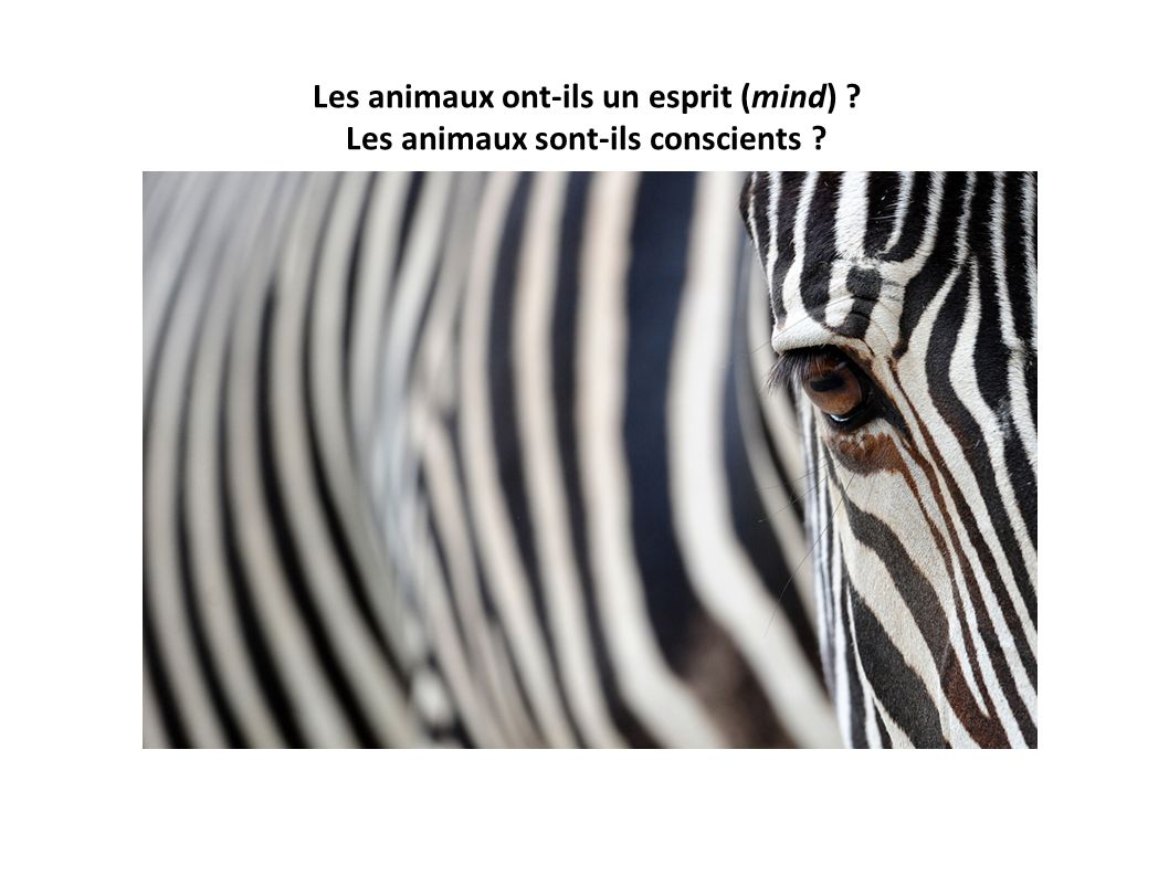 Les animaux ont-ils un esprit (mind) Les animaux sont-ils conscients