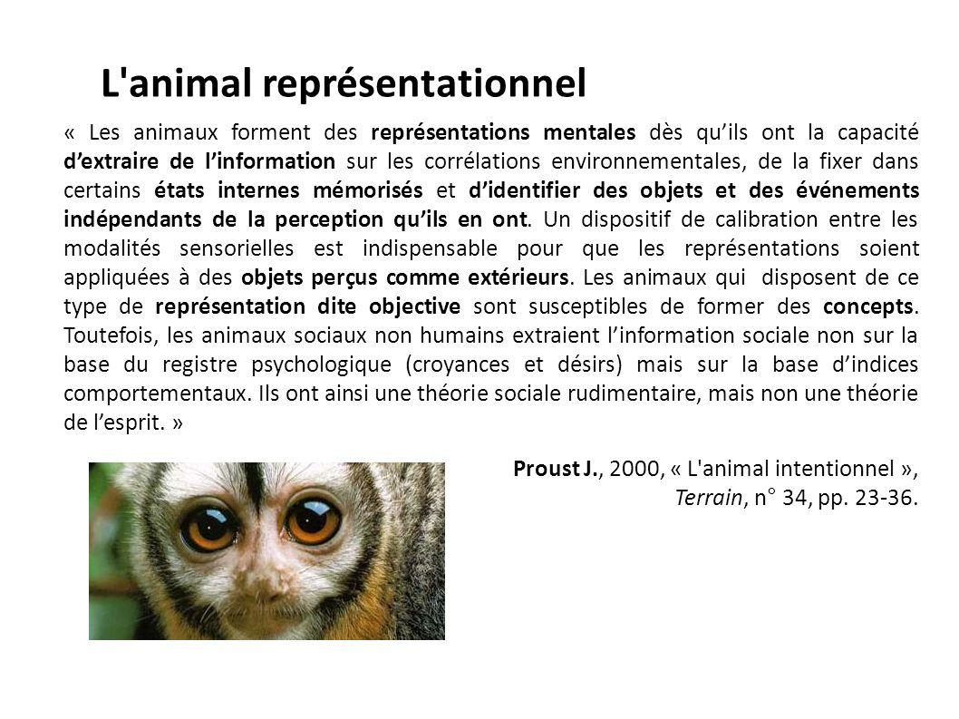 L animal représentationnel