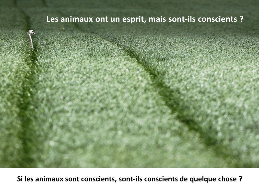 Les animaux ont un esprit, mais sont-ils conscients