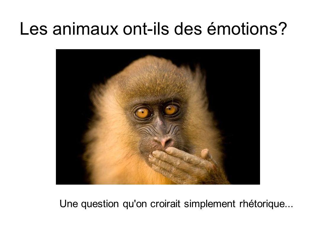 Les animaux ont-ils des émotions