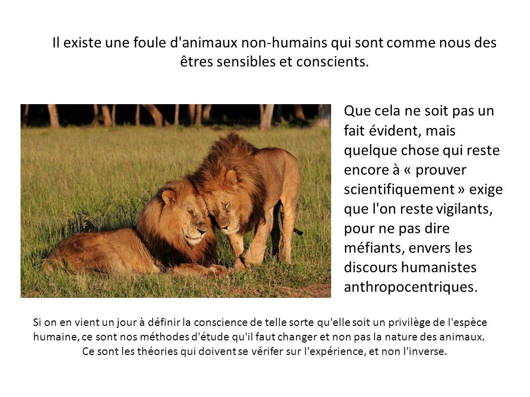 Il existe une foule d animaux non-humains qui sont comme nous des êtres sensibles et conscients.