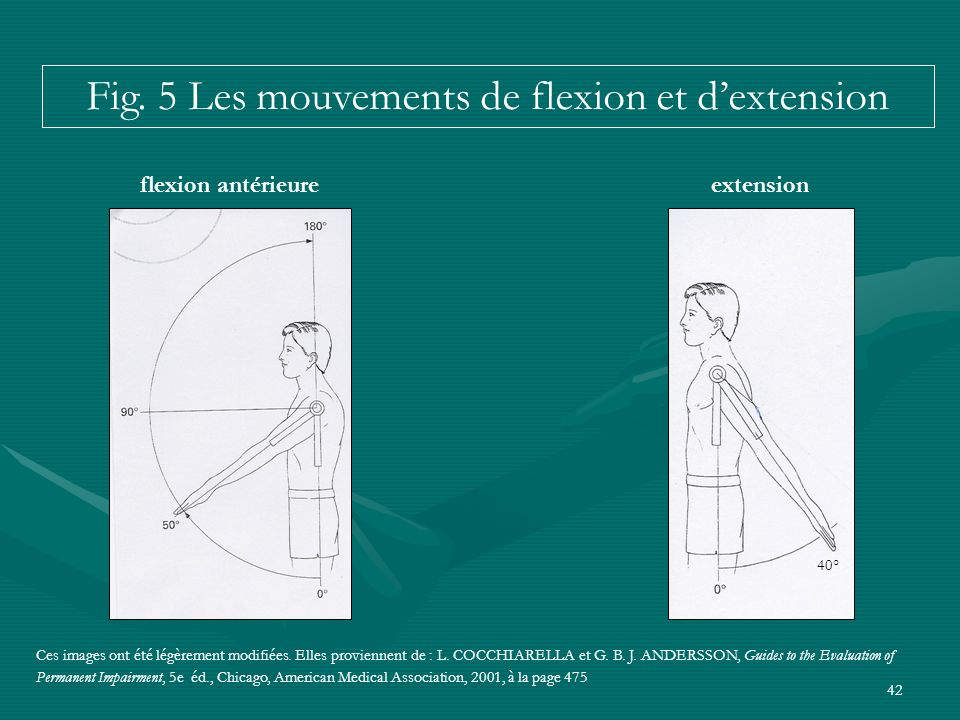 Fig. 5 Les mouvements de flexion et d'extension