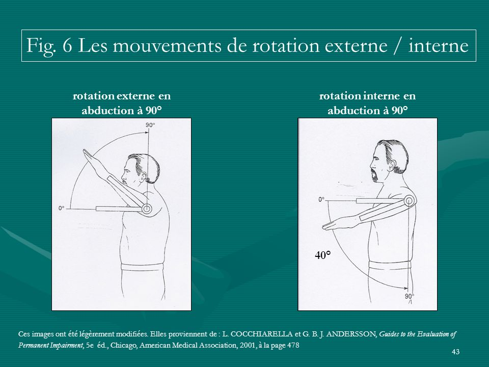 Fig. 6 Les mouvements de rotation externe / interne
