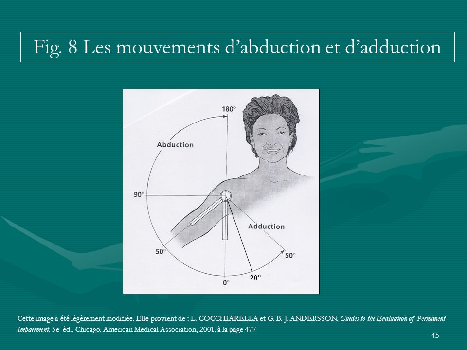 Fig. 8 Les mouvements d'abduction et d'adduction