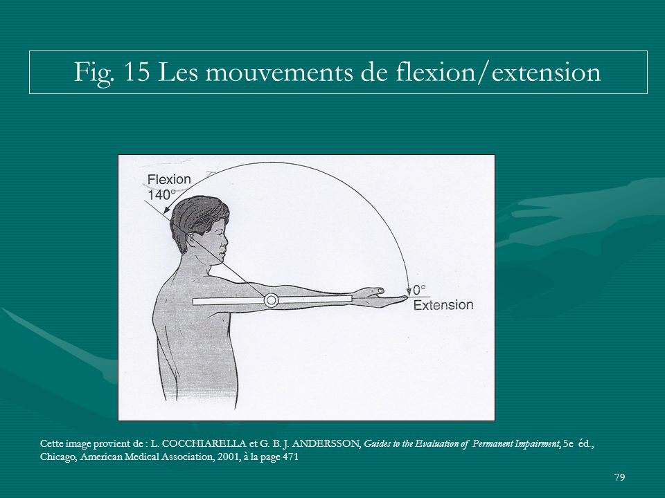 Fig. 15 Les mouvements de flexion/extension