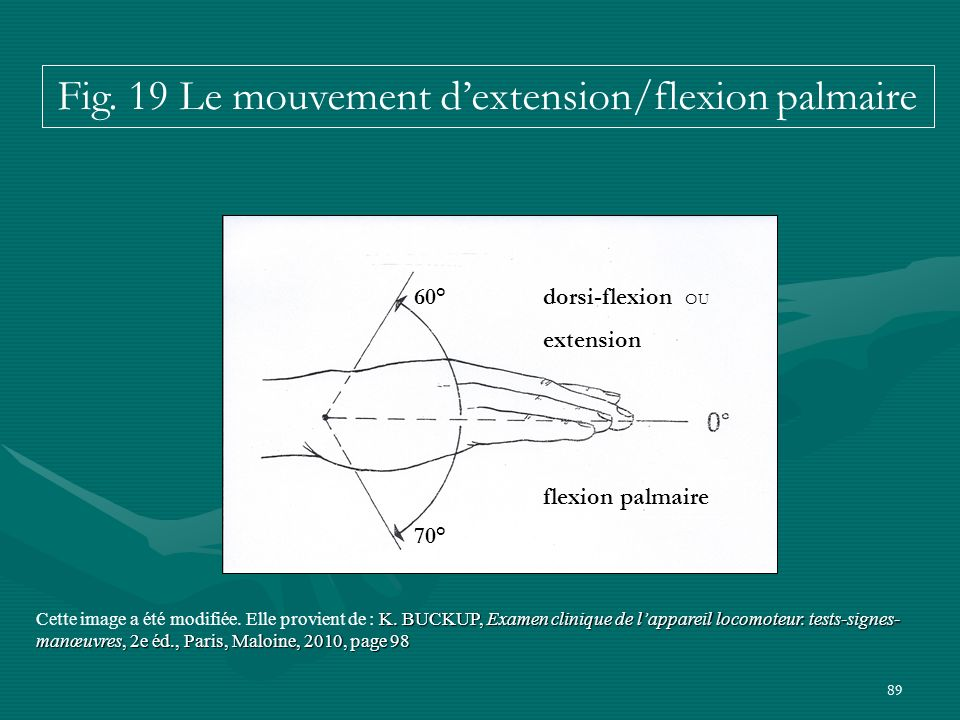 Fig. 19 Le mouvement d'extension/flexion palmaire