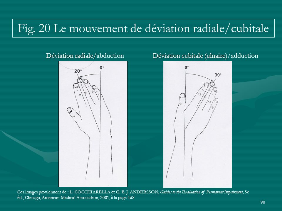 Fig. 20 Le mouvement de déviation radiale/cubitale
