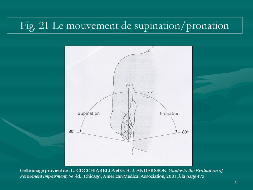 Fig. 21 Le mouvement de supination/pronation