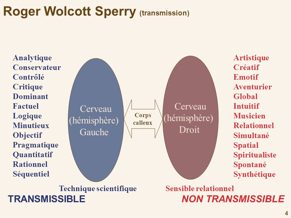 Roger Wolcott Sperry (transmission)