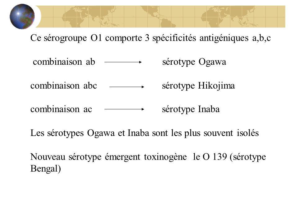 Ce sérogroupe O1 comporte 3 spécificités antigéniques a,b,c